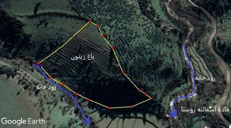*باغ زیتون ومیوه در کنار رود  بهشت گیلان شمال *
