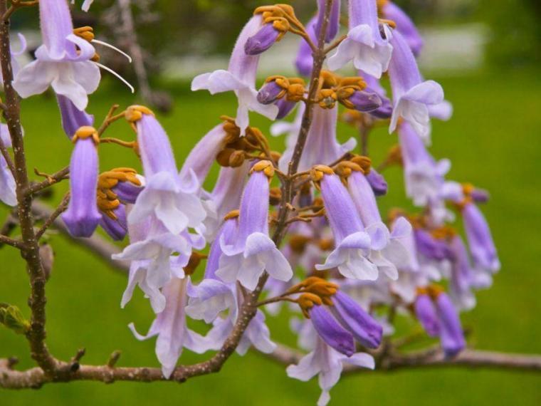 بذر بونسای و گل کمیاب نایاب خارجی اورجینال